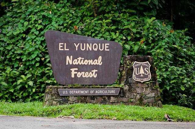 El_Yunque_National_Forest-Rio_Grande-Puerto_Rico-290fd86b6ea64356bbb73e14bab6077a_c