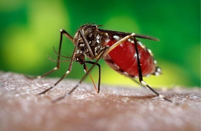 zika virus hits caribbean