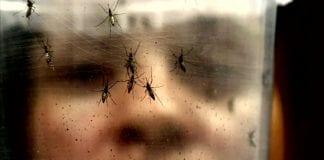 Zika virus miami-dade florida