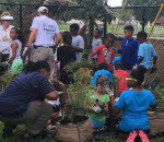 youths experiencing gardening - Caribbean National Weekly News