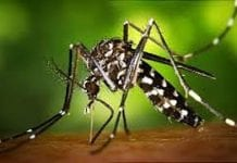 CARPHA launches new initiative to the fight Zika Virus