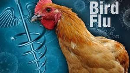 Dominican Republic Government fighting bird flu