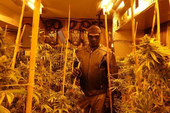 Herbman hustling in Colorado