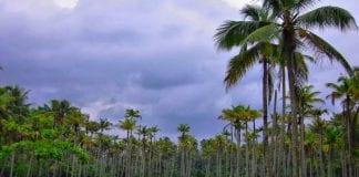 Coconut farming guidelines