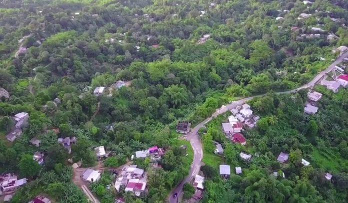 Jamaica agriculture