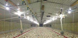 poultry imports