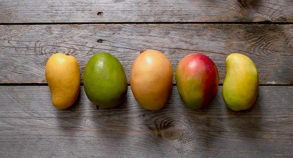 Julie & East Indian Mangoes from Jamaica coming to South
