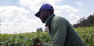 farmworkers florida